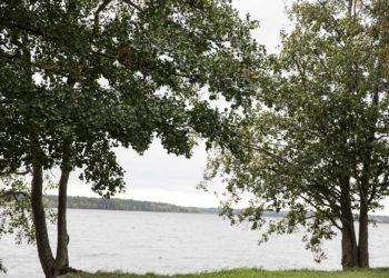 Näkymä uimarannan ja päiväkodin väliin jäävästä puistosta Liekovedelle voisi olla kova kilpailuvaltti uimahallille.