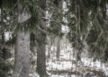 Aitoa puistometsää keskellä Varilaa. Puussa on pöllön pönttö.