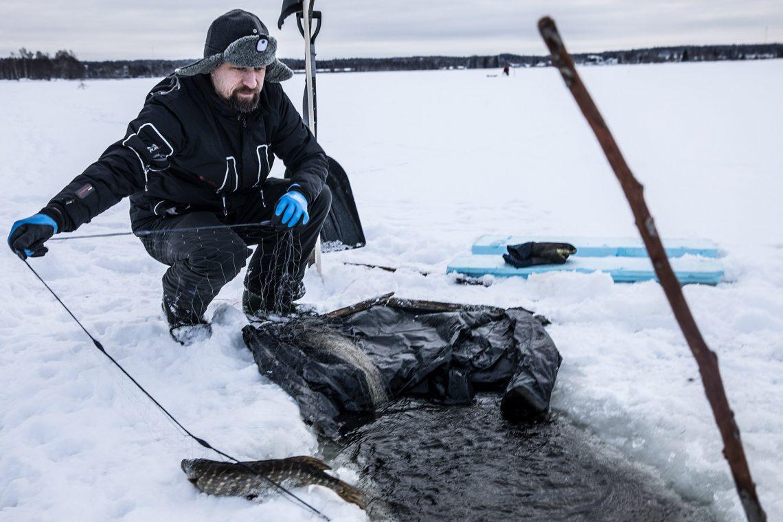 Päivän ensimmäinen kala on hauki. Verkkoa nostamassa Petteri Paso.