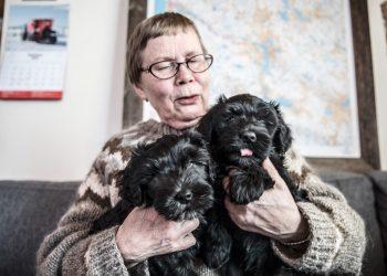 Kaikki eläimet ovat hellyttäviä pieninä. Anja Lahdenperä muistuttaa, että koira on monivuotinen kumppani. Koira elää yleensä toistakymmentä vuotta.