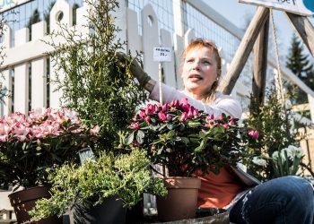 Puutarhuri Naomi Mesin myy muun muassa kesäkukkia ja perennoja Häijäässä.
