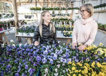 Myyjä Sonja Lumiaho ja yrittäjä Jaana Liemola uudessa 140 neliömetrin kesäkukkamyymälässä.