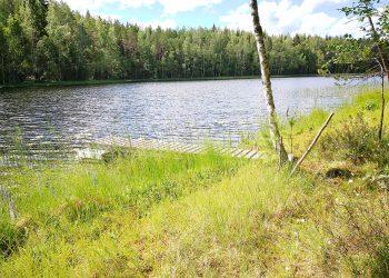Kalastajille rakennettu laituri Kaiturilla. Näitä pieniä laitureita on ympäri järveä useita.