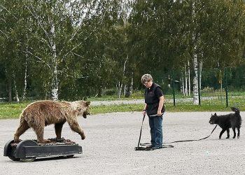 Mimmi Mäkynen ja Zemin Gladiola Erri matkasivat Ikaalisista Sastamalaan kohtaamaan karhun.